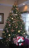 会場のクリスマスツリー